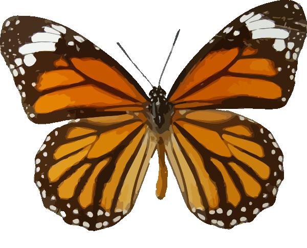 Orange Butterfly Clip Art at Clker.com - vector clip art ...