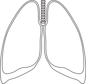 Lung Clear Lung Clip Art
