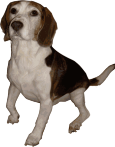 Beagle Medium Version Clip Art