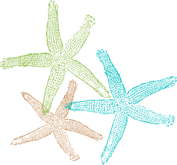 starfish outline png