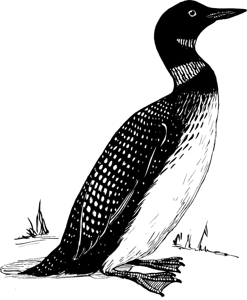Loon Clip Art at Clker.com - vector clip art online, royalty free ...