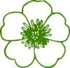 Green Buttercup Flower Clip Art