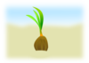 Coconut Seed Clip Art