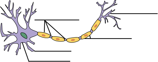 Worksheets Neuron Worksheet label the neuron clip art at clker com vector online download this image as