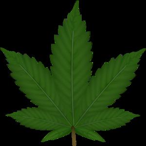 cannabis leaf clip art at clker com vector clip art online rh clker com marijuana leaf clipart