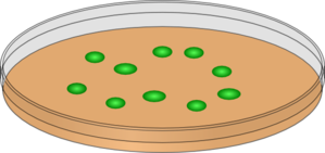 Orange Petri Dish With Green Cells Clip Art