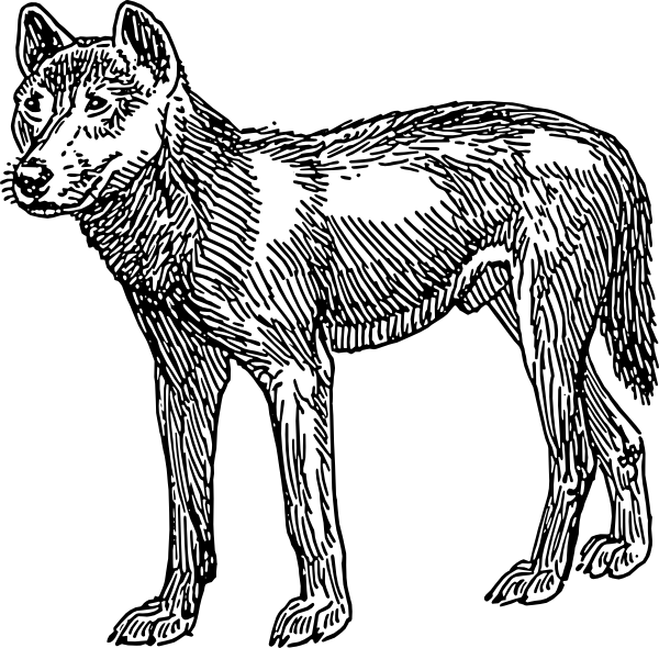 dingo dog clip art