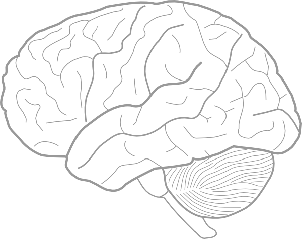 Brain Sketch Clip Art at Clker.com - vector clip art ...