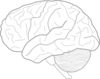 Brain Sketch Clip Art