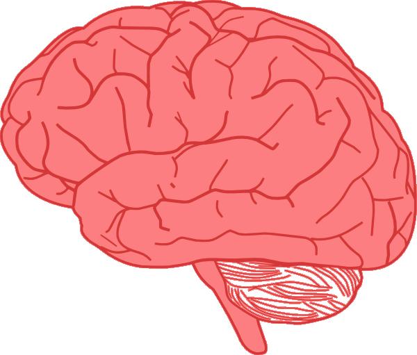 brain clip art at clker com vector clip art online royalty free rh clker com brain clip art black and white brain clipart free