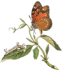 Butterfly Sitting On Leaf Clip Art