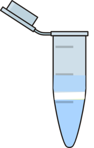 Phases Eppendorf Containing Ring  Clip Art