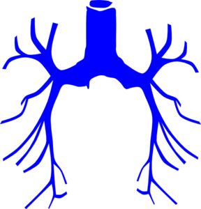 Bronchial Tree Clip Art