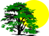 Sun And Tree Clip Art