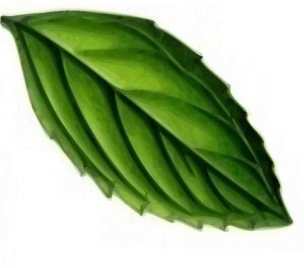 Mint Leaf Clip Art at Clker.com - vector clip art online, royalty free ...