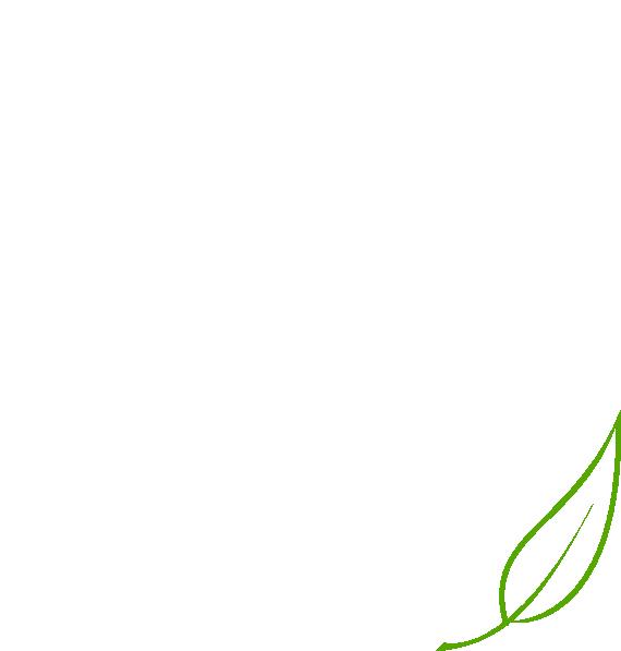 Green Tea Leaves Clip Art