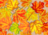 Fall Leaves, Superbright Clip Art