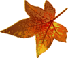 Fall Maple Leaf Clip Art