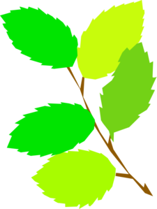 5 Green Leaves Clip Art