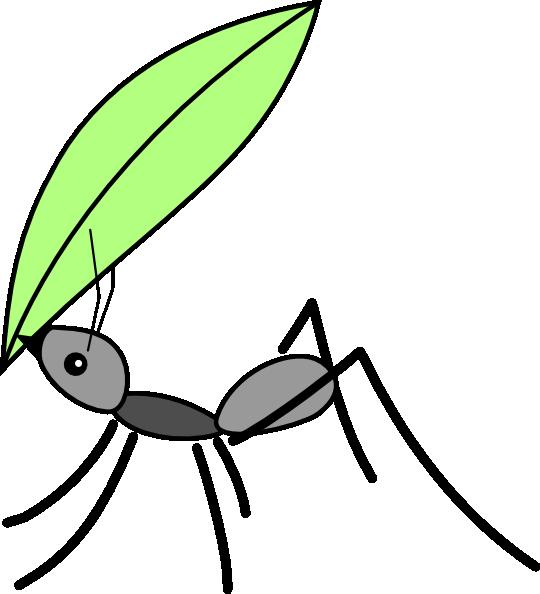 Ant Carrying A Leaf Clip Art At Clker.com