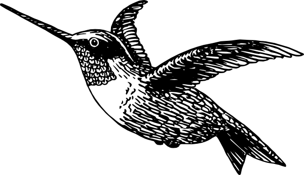 Hummingbird Clip Art at Clker.com - vector clip art online, royalty ...