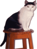 Cat On Stool Clip Art