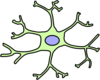Astrocyte Clip Art