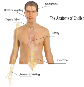 Human Body Anatomy Basics Clip Art