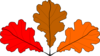 3 Oak Leaves Clip Art