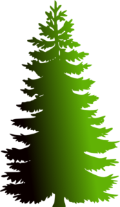Evergreen With  Shade  Gradient Clip Art