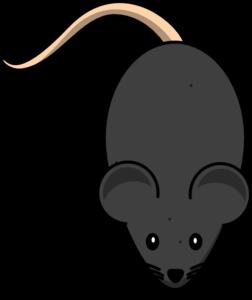 Black Mouse clip art - vector clip art online, royalty free ...