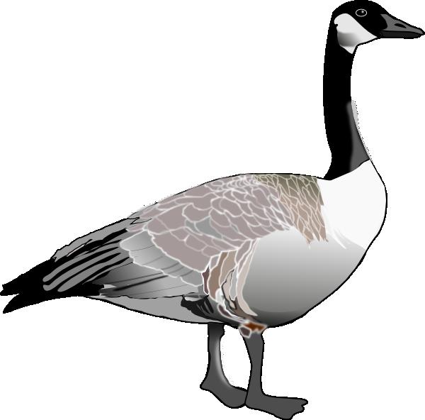 canadian goose clip art at clker com vector clip art online rh clker com goose clipart goose clipart