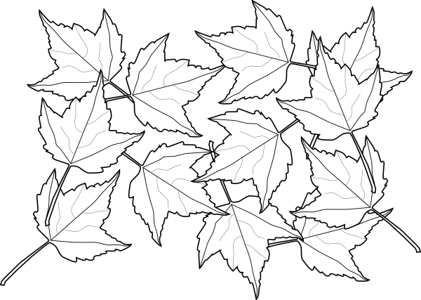 Maple Leaves Clip Art at Clker