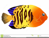 Seaside Clipart Images Image