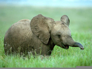 Smiling Baby Elephant Free Images At Clker Com Vector Clip Art Online Royalty Free Public Domain Free icons of elephant in various design styles for web, mobile, and graphic design projects. clker
