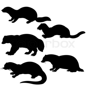 Vector Silhouettes Animal On White Background Image