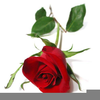 Cliparts Roses Image