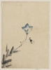 [blue Blossom At The End Of A Stem] Image