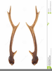 Deer With Antlers Clipart Image