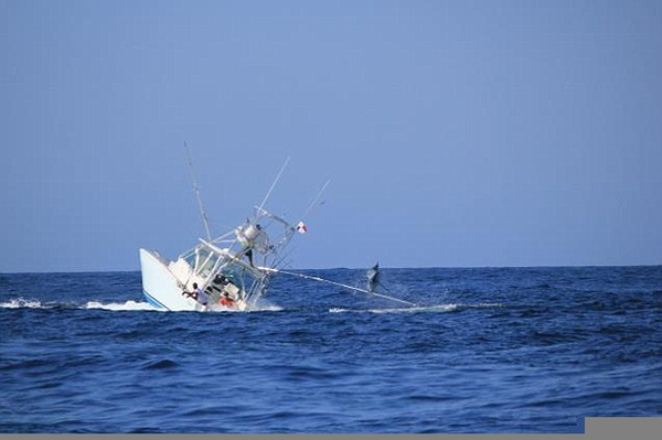 White Marlin Underwater | Free Images at Clker.com ...