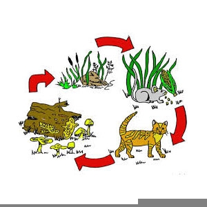 food chain clipart free images at clker com vector clip art rh clker com food chain clip art/free food chain clipart black and white