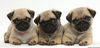 Cute Dog Breeds Image