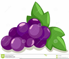 Bunch Of Grapes Clipart Image