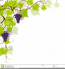Grapevines Clipart Image