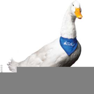 aflac duck clipart free free images at clker com vector clip art