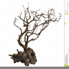 Tree Clipart Roots Image