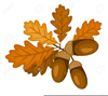 Oak Leaves Acorns Clipart Image