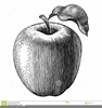 Apple Tree Clipart Black White Image