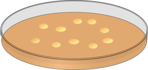 Orange Petri Dish With Bacterial Colonies Clip Art