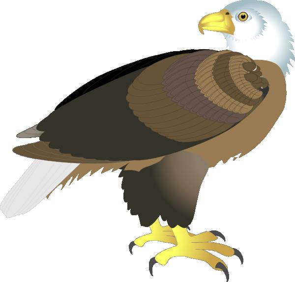 free bald eagle clipart - photo #10